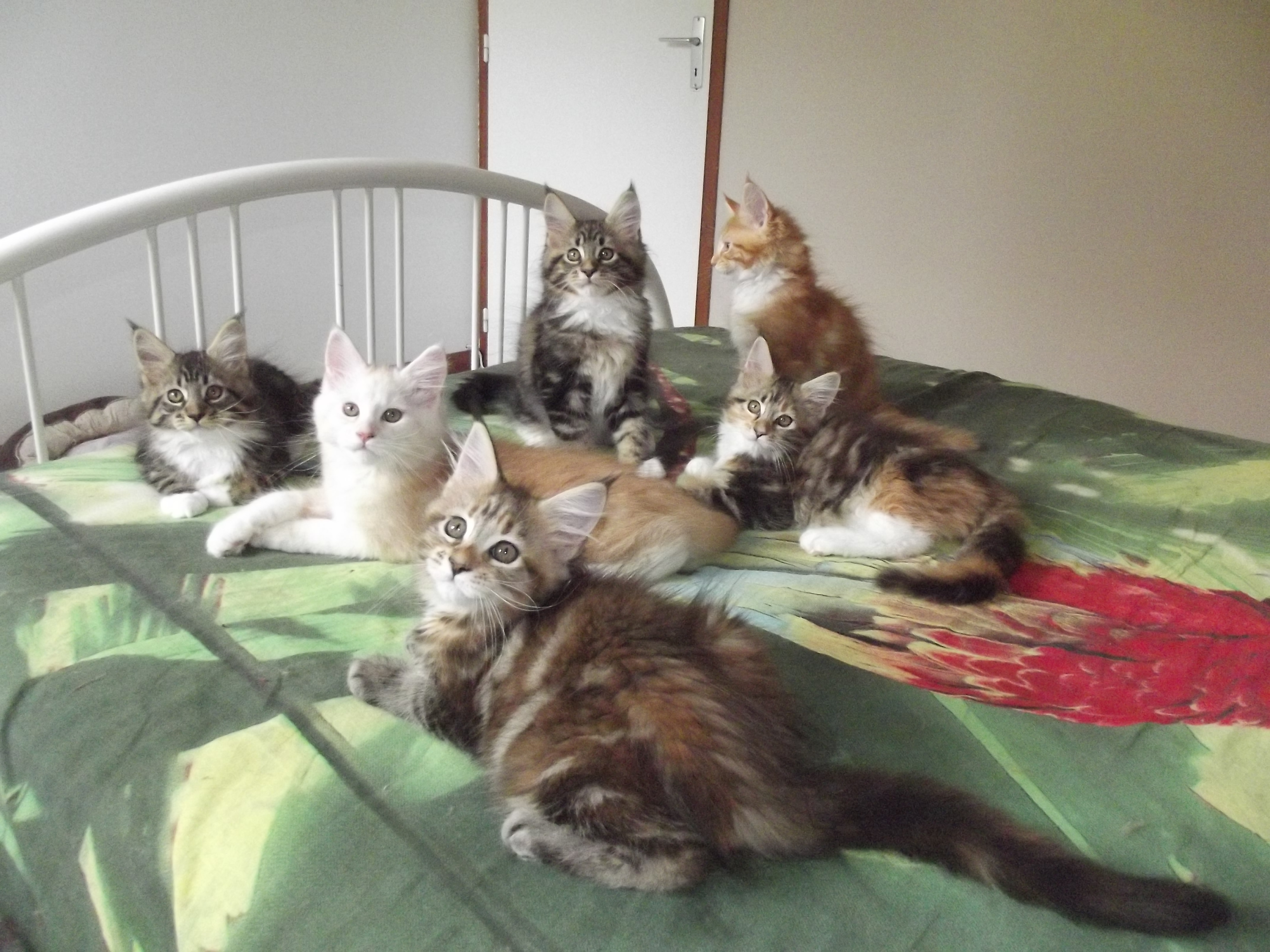 Les chatons de Highlight - 2016