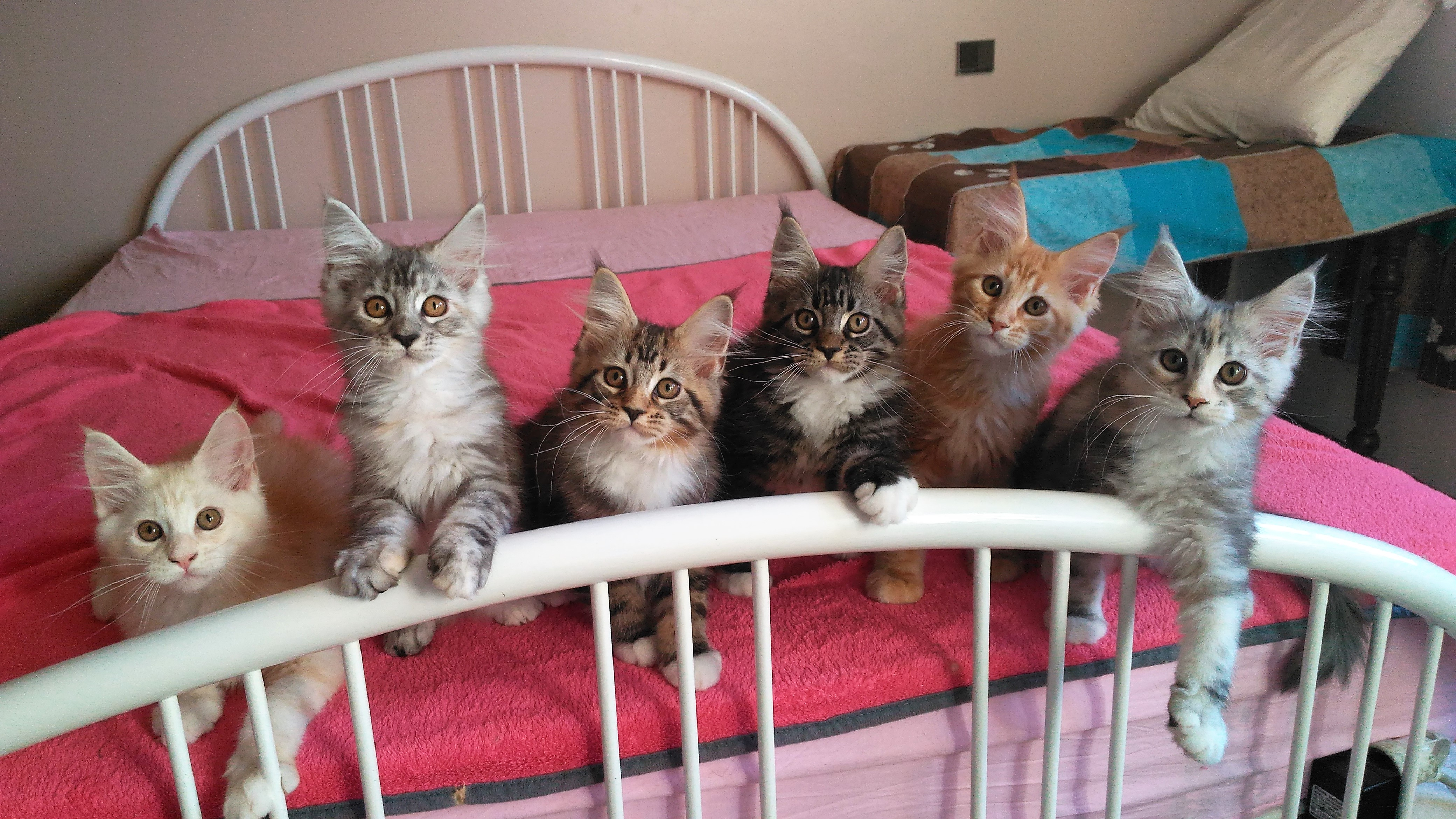 Les chatons de Highlight - 2018